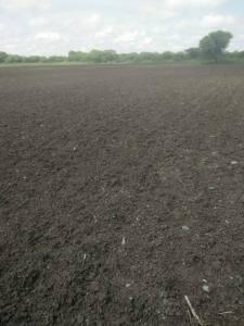 Shri. Ashok Pawar's field in Osmanabad, dry despite rains Photo: Ashok Pawar, Omarga