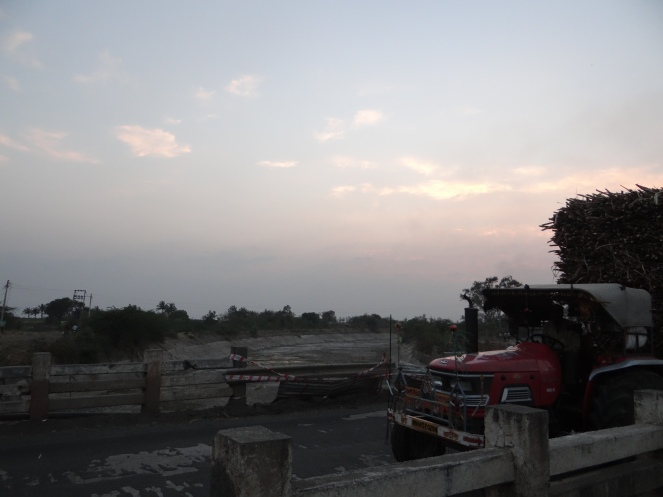 Sugarcane going to Factory for crushing on the background of dry Ujani Canals. Photo: Parineeta Dandekar