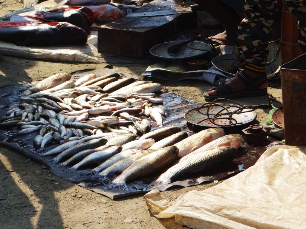 Local market in Kameng Basin. Endangered Tor Putitora or Golden Mahseer forms a part of the village catch