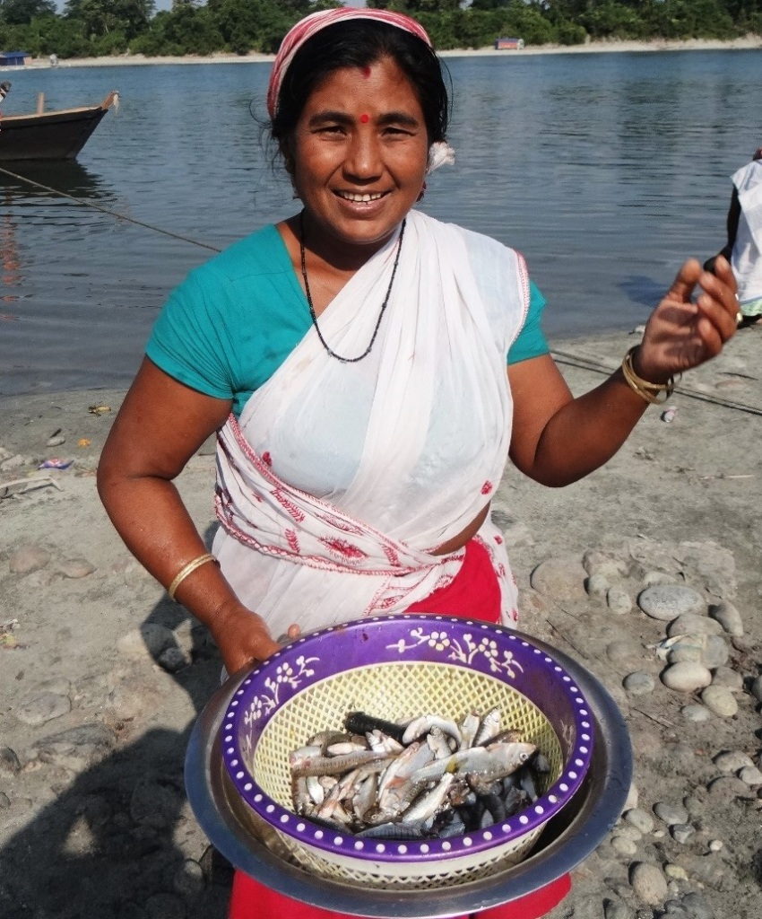 Above: Lady with her quick catch at Alubari Ghat on the Lohit River in Arunachal Pradesh. several catches like these throughout the day help her with her livelihood and protein security