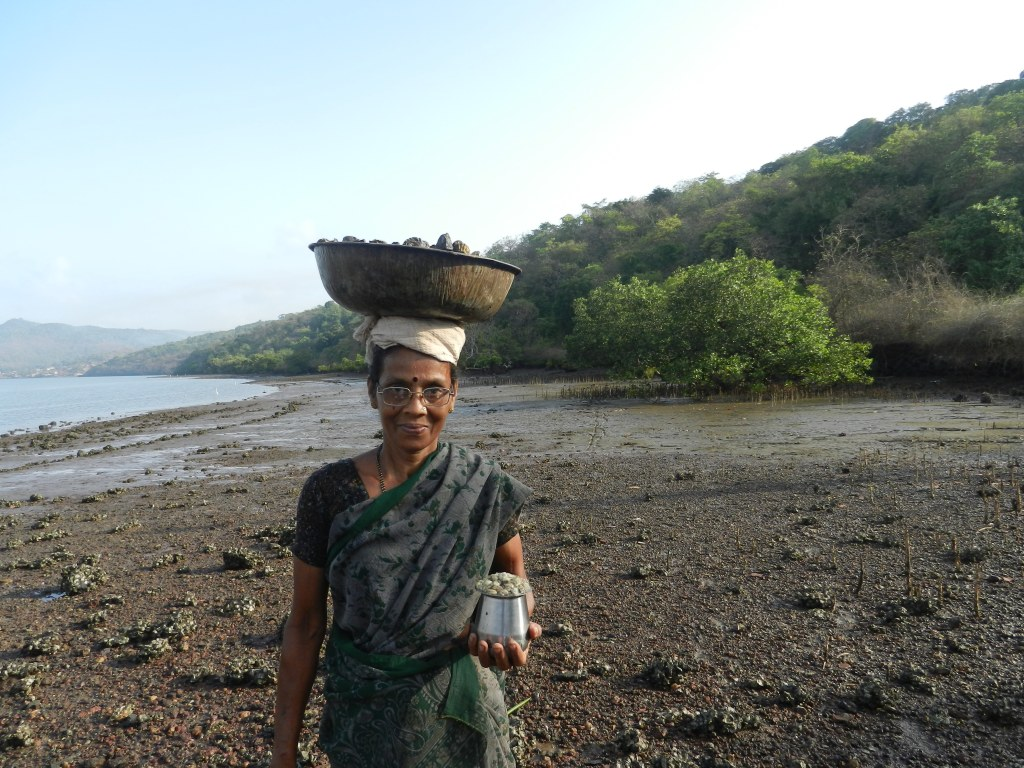 Mussel (Bivalve) Collection in one of Western Ghat River Estuaries