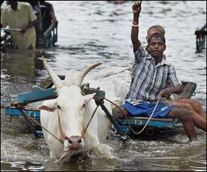 M_Id_48956_Tamil_Nadu_flood
