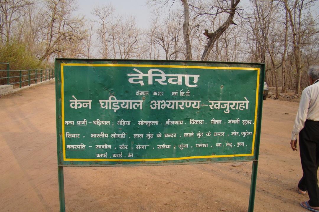 Ken Ghariyal sanctuary (Photo by Manoj Misra)