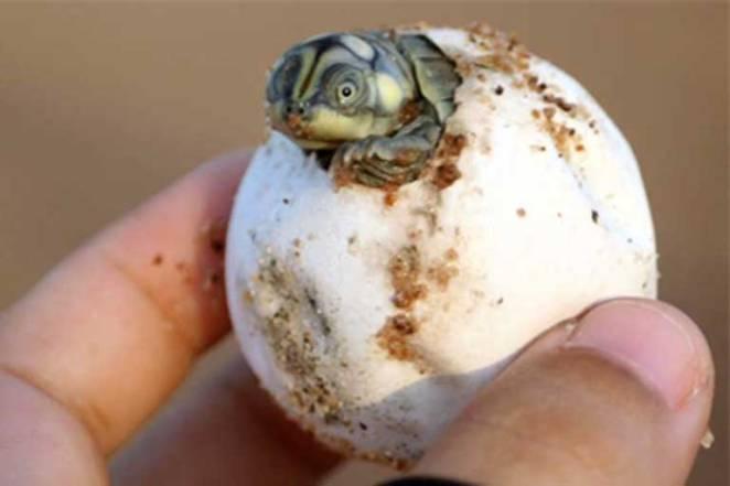 7-turtles