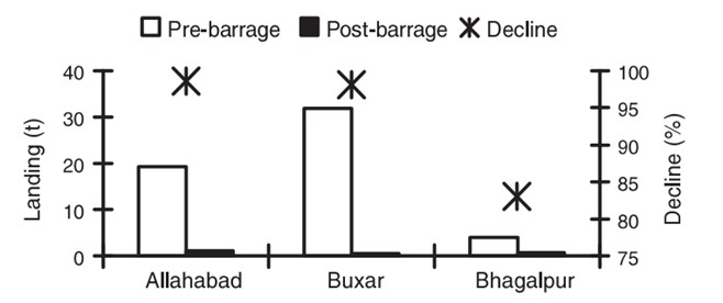 Fish landing in U.P. and Bihar before and after commissioning of Farakka Barrage (CIFRI, 2014)