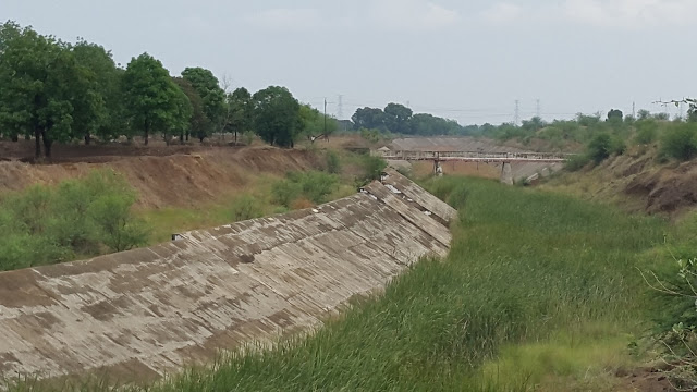 Trees and shrubs grown in half done Right Bank Canal of Gosikhurd Dam (Photo: Jan Manch)