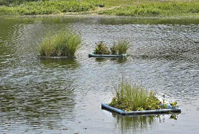 Floating Wetlands in Bengaluru (Photo: The Hindu)