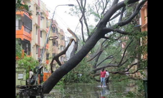 Damage caused by Vardah Cyclone in Chennai (Photo: firstpost)