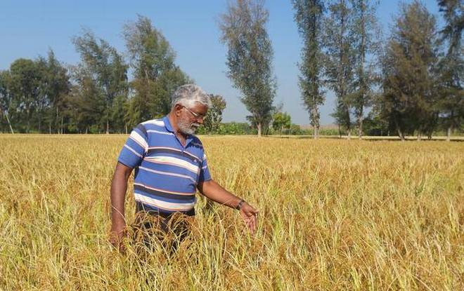 progressive-farmer-kaliash-murthy-at-his-farm-near-t-narsipur-in-mysuru-district