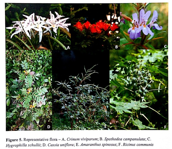 Floral diversity of Mutha Riverbed (Source: Report of Technical Support Group on Biodiversity of PMC)