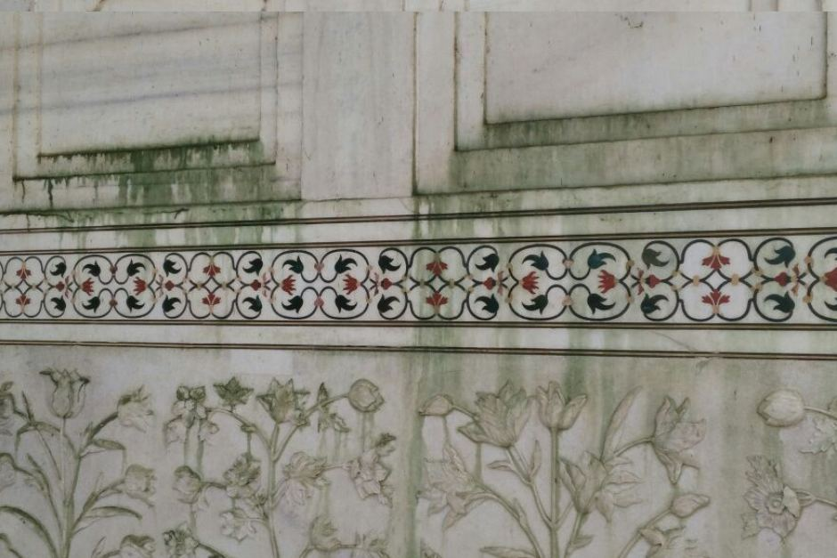 taj-white-marble-turning-green-due-to-insect-breeding-in-polluted-yamuna