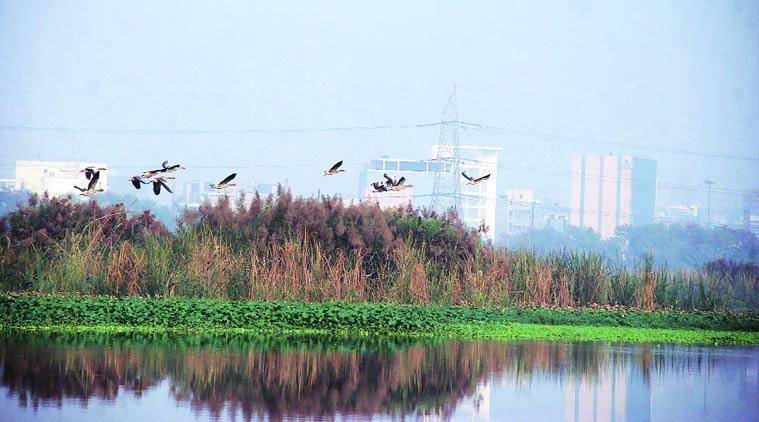 birdsanctuary-main