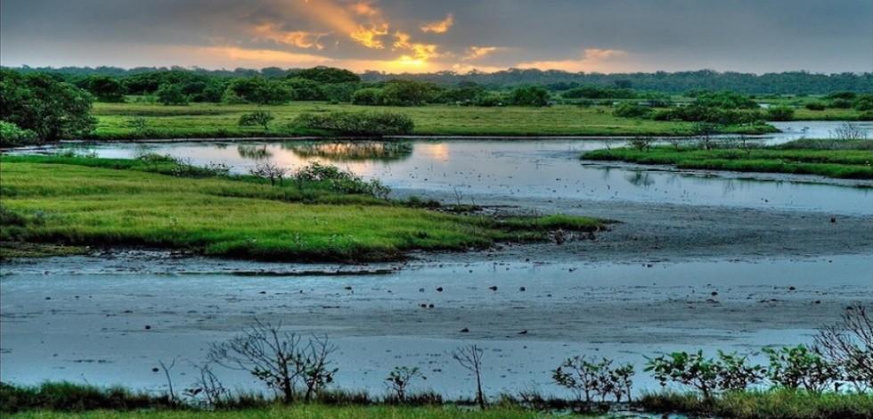 wetlands-1000x480