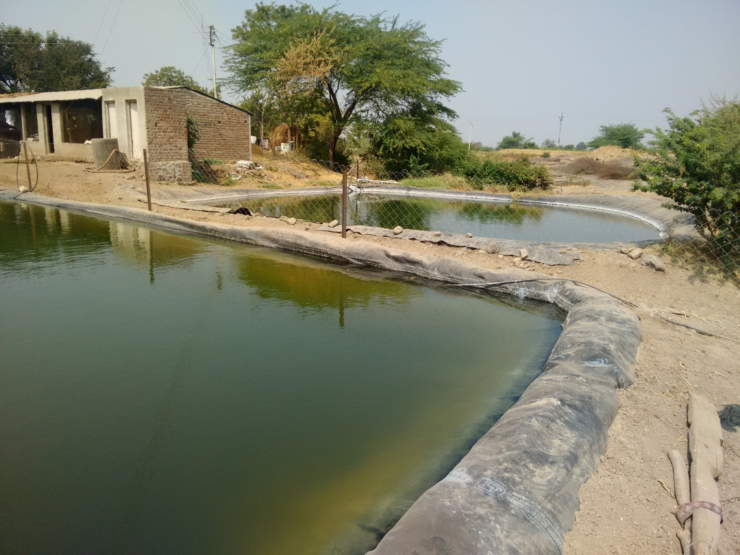 Two small farm ponds next to each other in Hiwargaon Pawsa