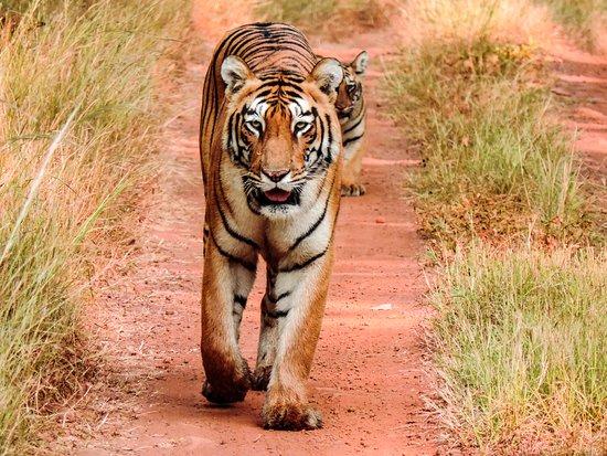 Tadoba Andhari Tiger Reserve (Triadvisor.com)