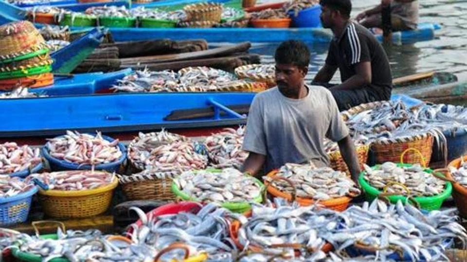 india-economy-fishing_8ddd2f56-28bc-11e7-b189-41b029cdb6ad