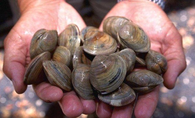 littleneck_clams_usda96c1862