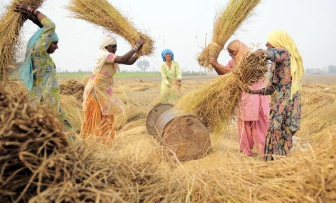 threshing_harvest_sangrur_punjab_india-neil-palmer-ciat-2011-wikimedia-commons_0.jpg