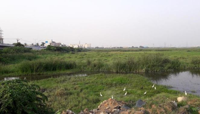 The Pallikaranai marsh in the southern part of the city with streams draining into it (Photo by S. Gopikrishna Warrier)