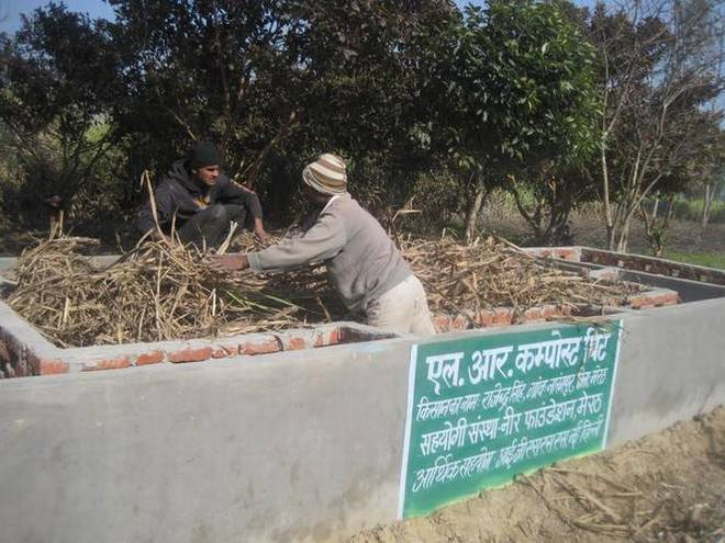 A farmer fills a compost pit with sugarcane leaves to make fertilizer in Meerut (Photo Credit Parvez Khan)