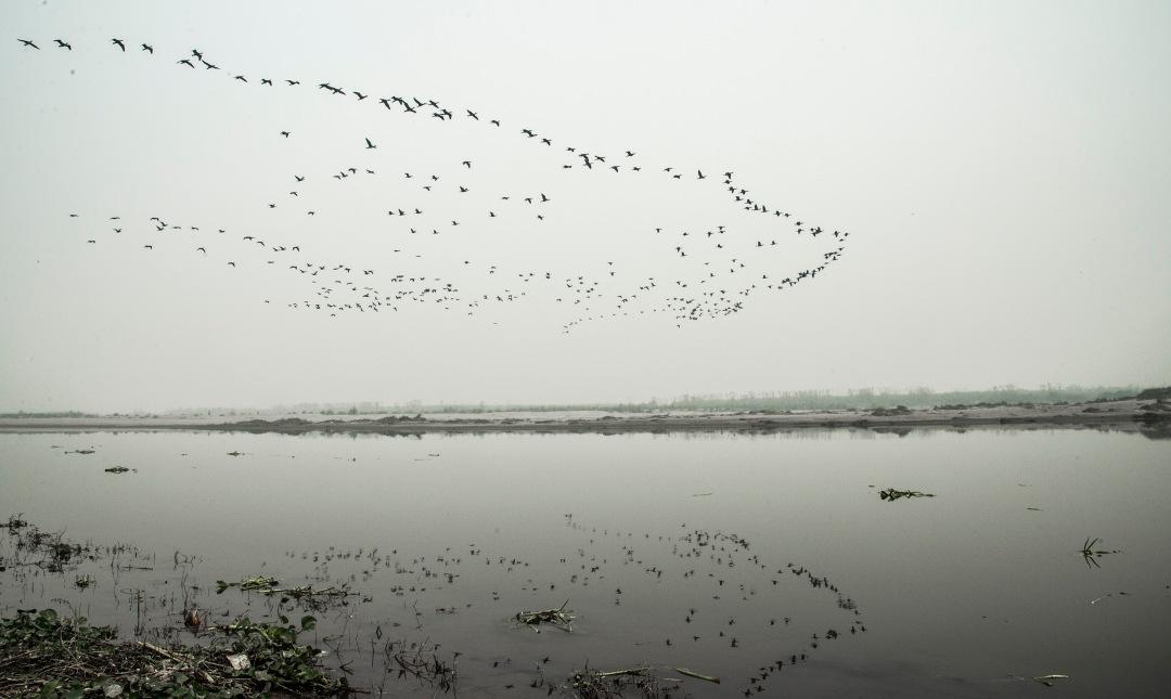 Cormorants in formation lowres