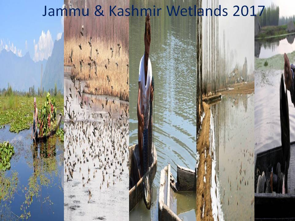 Siltation Encroachment Pollution Choke Jammu Kashmir Wetlands