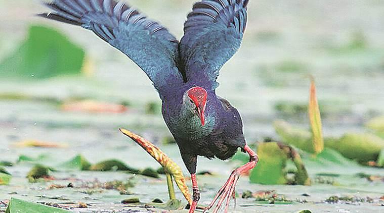 punjab wetlands 2017 ramsar sites under severe threats sandrp