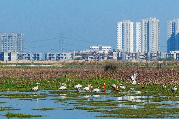 The Basai wetlands in Gurugram (Photo Pankaj Gupta)