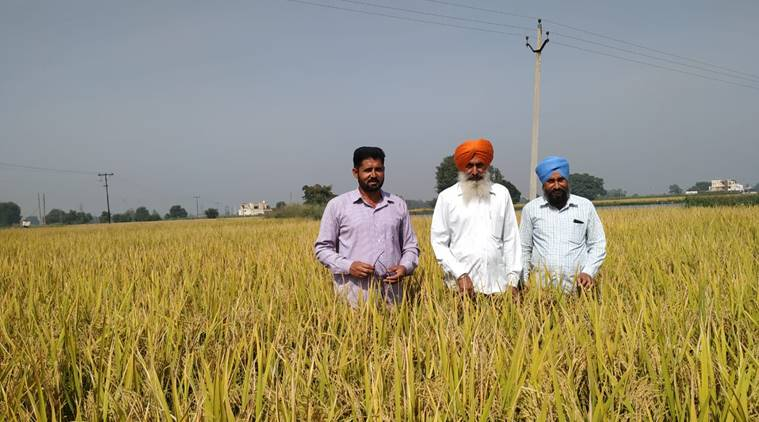 DRP News Bulletin 29 October 2018: Better Paddy Options Exist For
