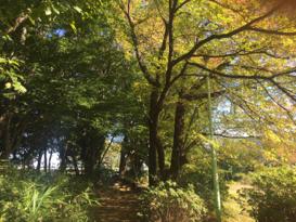 Satoyama on banks of tama