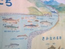 Signboard displaying the fish of the Tama in the stretch