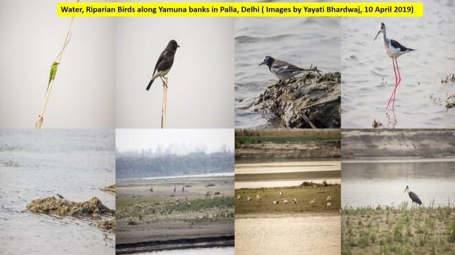 33 K Yamuna Birds Palla 10 4 2019 .jpg