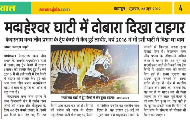 28 6 19 AU Tiger.png