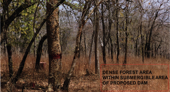 Dense Forest in Ken Betwa Submergence area - Source CEC Report