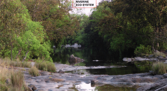 Ken Riverise Ecosystem that faces submergence under Ken Betwa Project - Source CEC Report
